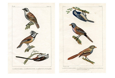 French Sparrow Prints, Pair, 1831