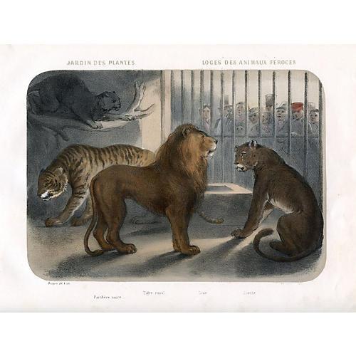 At a Paris Zoo - Lions & Tiger