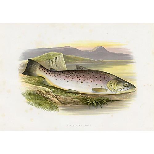 Great Lake Trout, 1879