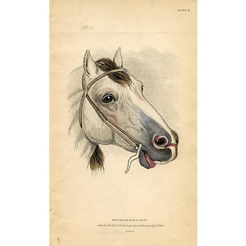 Horse Head Portrait, 1841