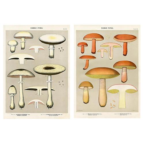 Edible Mushroom Prints, Pair
