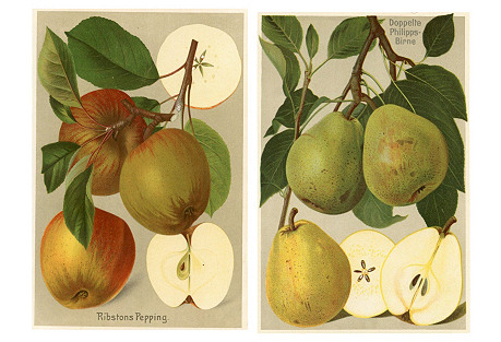 1908 Apple & Pear Prints, Pair