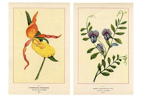 North American Wildflowers, Pair
