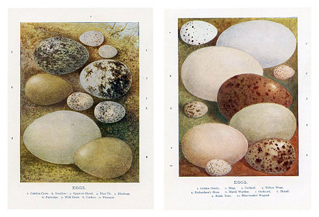 Bird Egg Prints, Pair