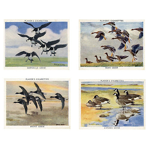 1930s Geese Collector Cards, S/4