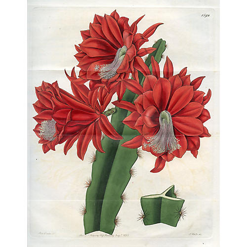 Red Cactus Print