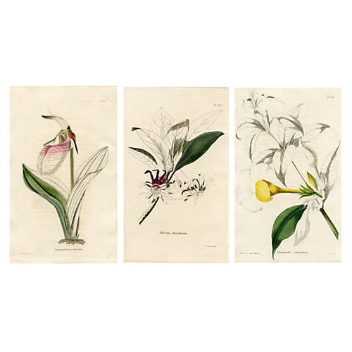 1820s Botanical Engravings, S/3