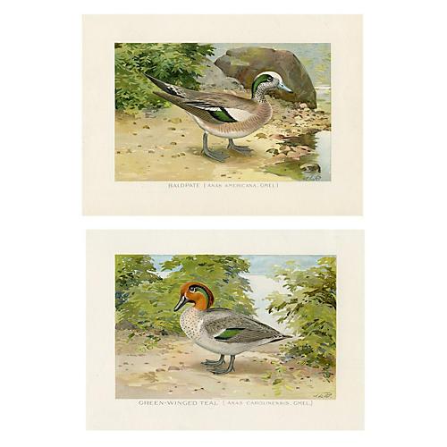 Ducks of New York, S/2