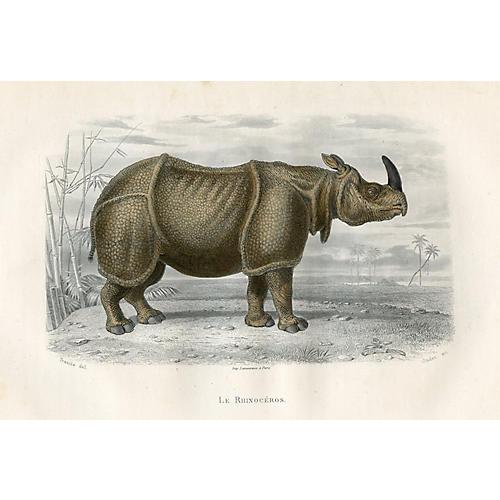 Rhinoceros, 1880
