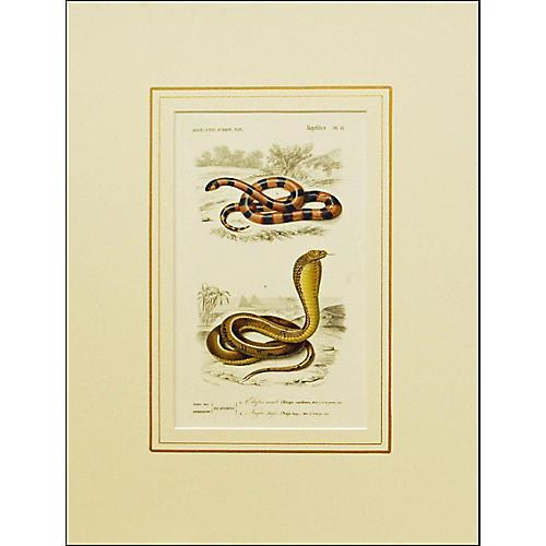French Snake Print, 1849
