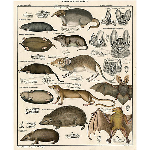 German Bat and Mole Print, 1843
