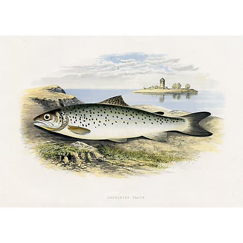 Lochleven Trout, 1879