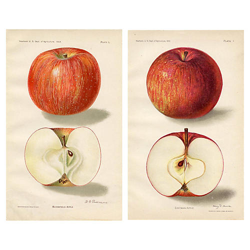 American Apples, Pair