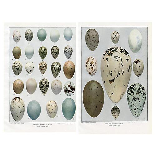 North American Bird Eggs, Pair
