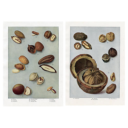 Pecans, Walnuts and other Nuts, Pair