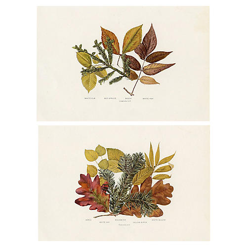 Leaves of Autumn, S/2