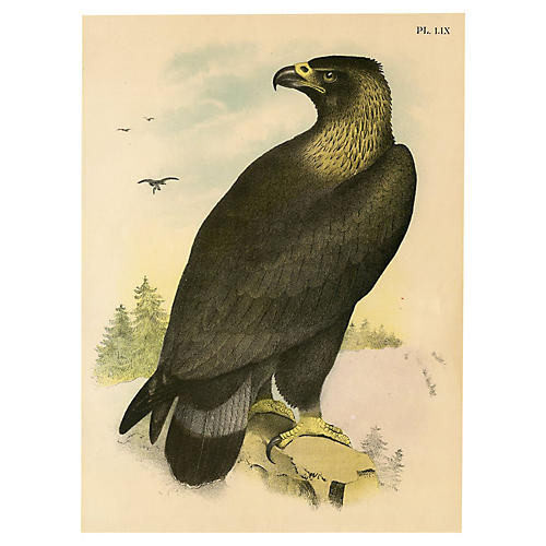 Golden Eagle, 1878