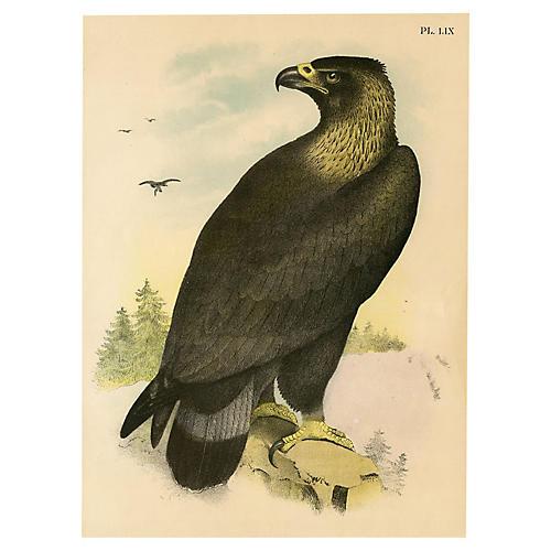 Golden Eagle, 1878