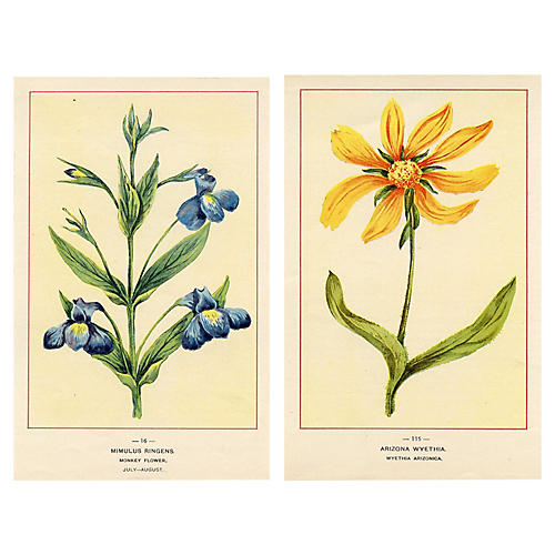 North American Wildflowers, Pair
