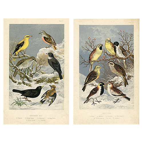 Thrushes and Buntings in Winter, Pair