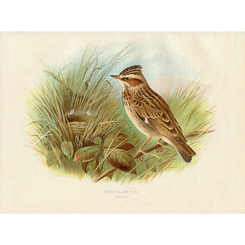 Wood Lark and Nest by Henrik Gronvold