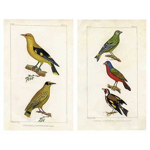 French Oriole & Finch Prints, Pair