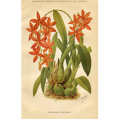 French Orchid Print, 1894