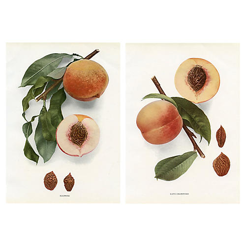 1917 Peach Prints, Pair
