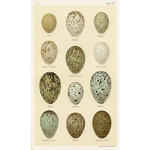 19th-C. Bird Egg Print