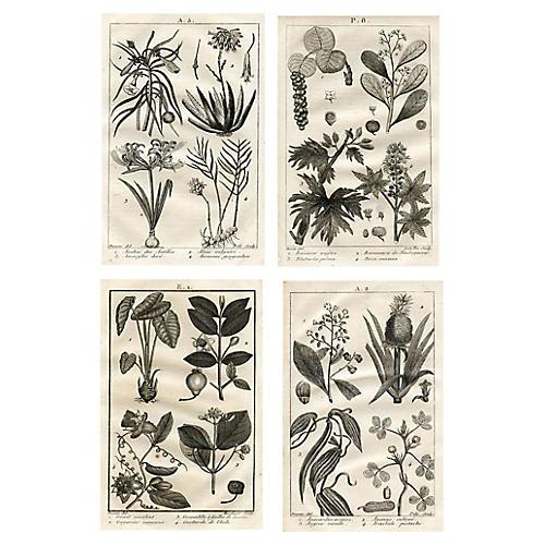 19th-C. Botanical Engravings, S/4