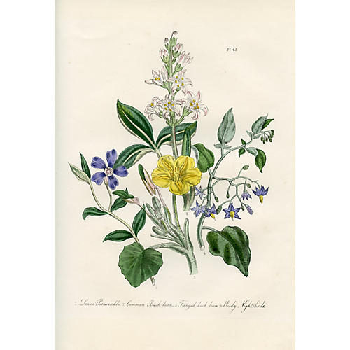 British Wildflowers by Jane Loudon, 1846