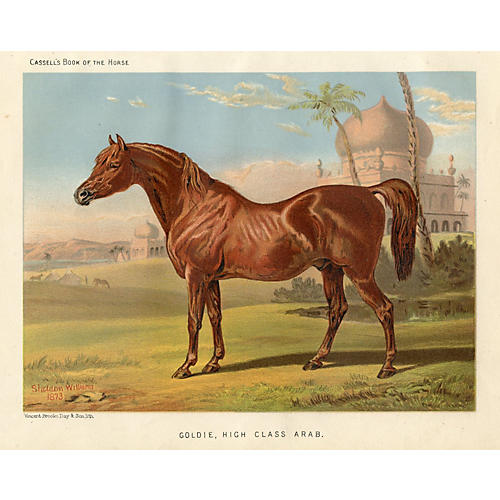 19th-C. Arabian Equestrian Print