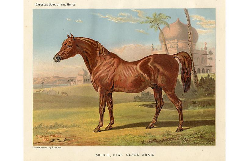 19th-C. Arabian Equestrian Print