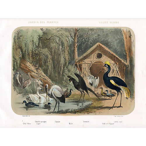 Birds at a Paris Zoo, C. 1850