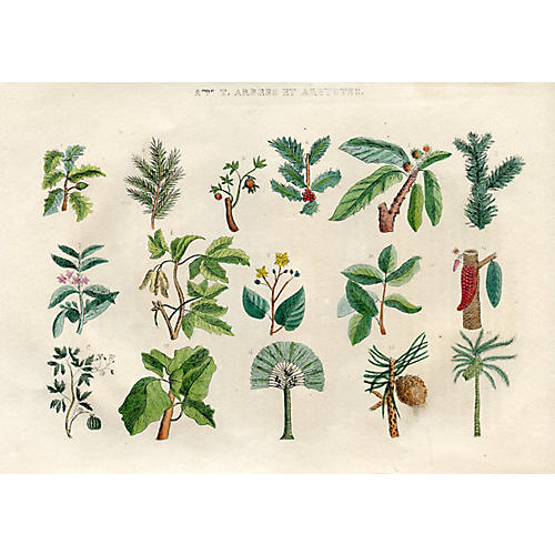 Young Naturalist's Botanical Print, 1830