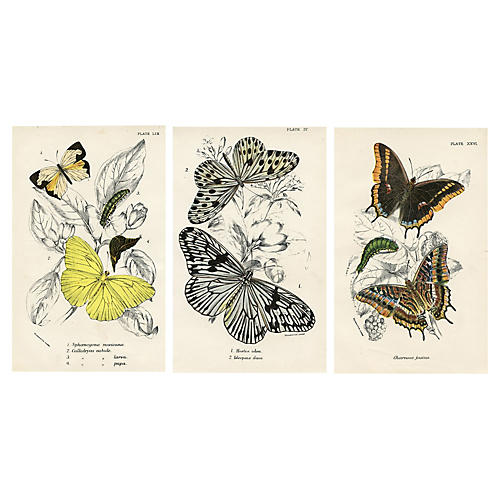 19th-C. British Butterfly Prints, S/3