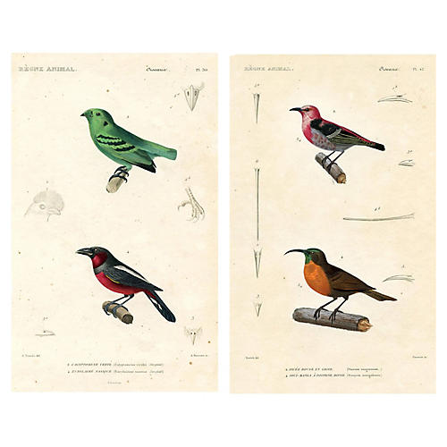 1850 French Bird Prints, Pair