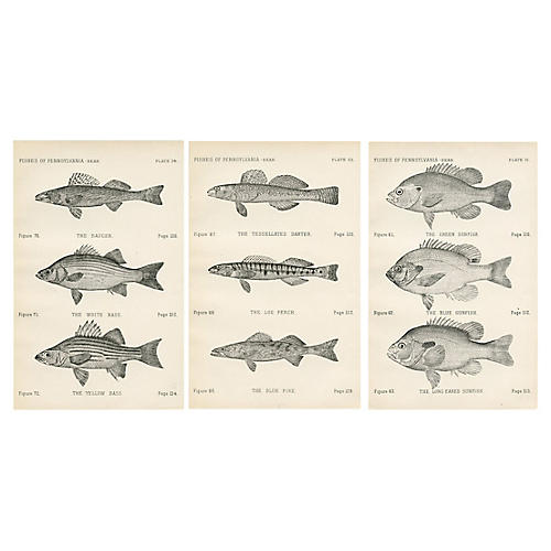 19th-C. North American Fish Prints, S/3