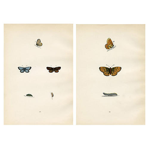 19th-C. British Butterfly Prints, Pair