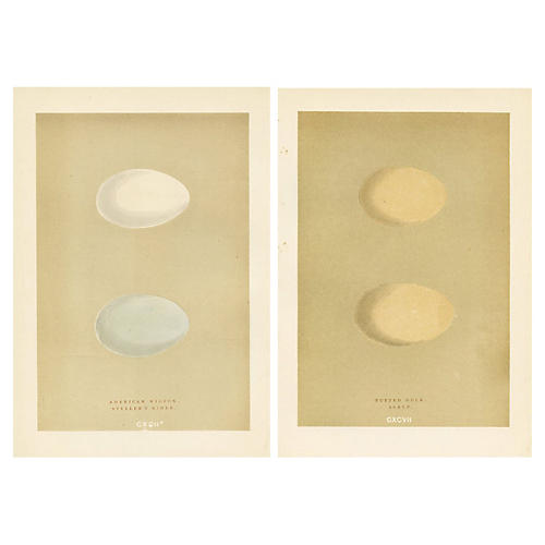 1890s Duck Egg Prints, S/2