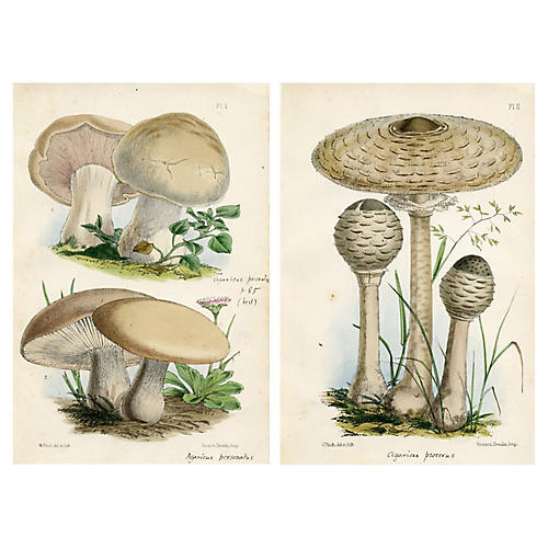 19th-C. Edible Mushroom Prints, S/2