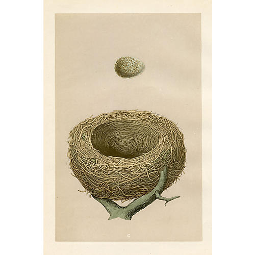 Redwing Nest & Egg, 1875
