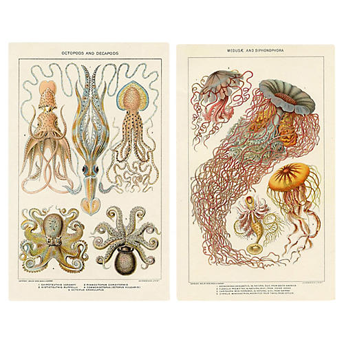Octopus and Jellyfish Prints, Pair
