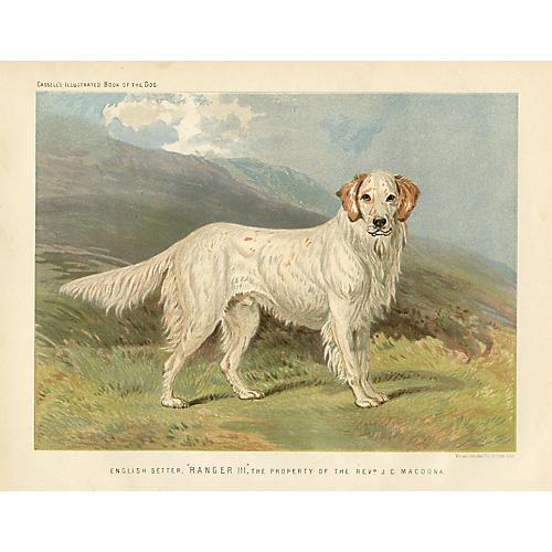 19th-C. English Setter Print