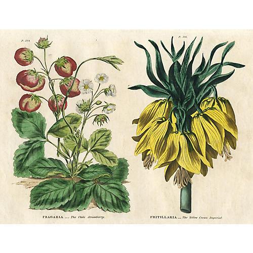 Strawberry and Fritillaria Print, 1820
