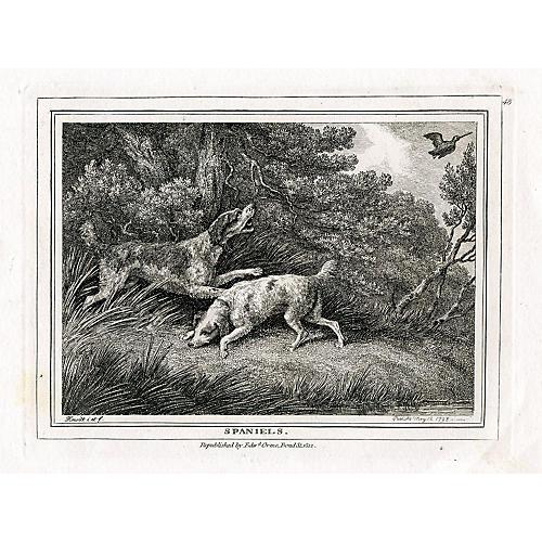 Spaniels, 1812 Engraving