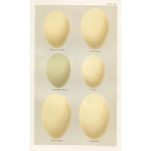 19th-C. Duck Egg Print