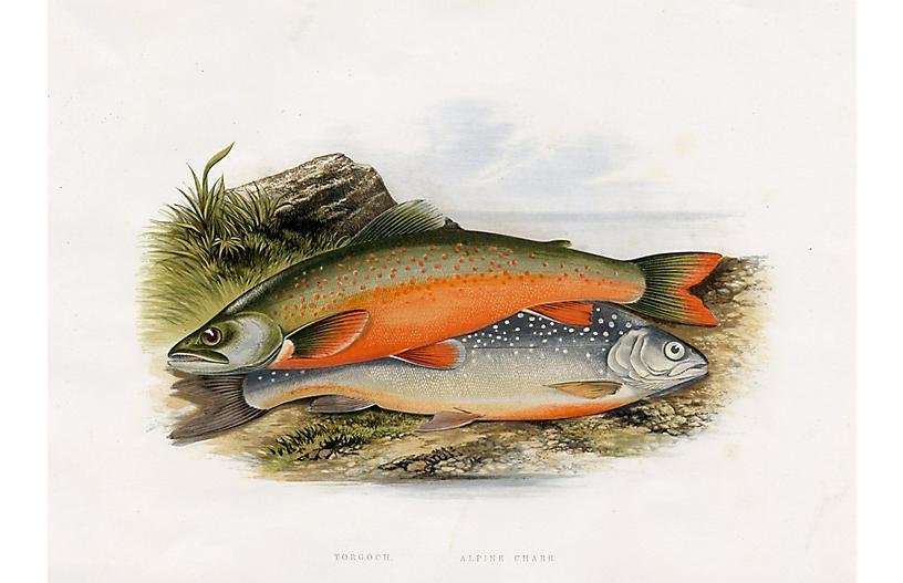 British Freshwater Fish, 1879 Print