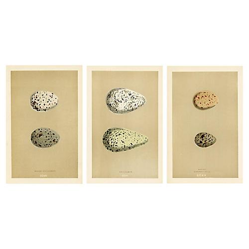 Shorebird Egg Prints, S/3