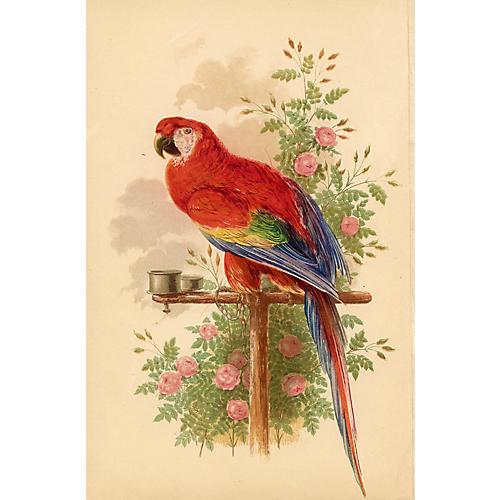 Parrot Print, 1851